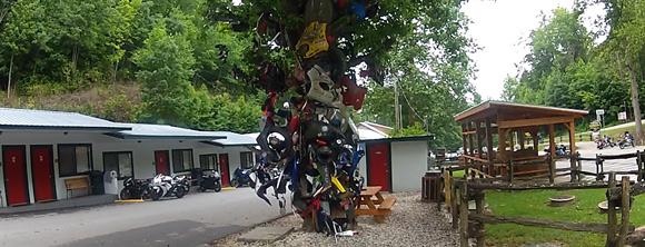 tree-of-shame